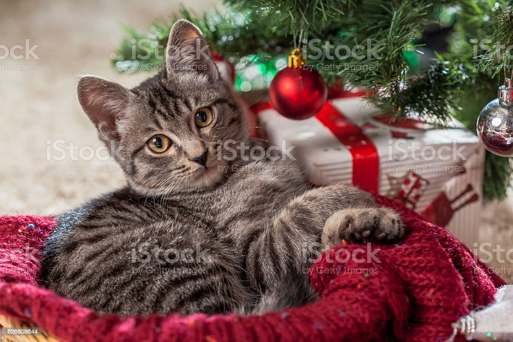 Christmas gifts and kitten under the tree stock photo