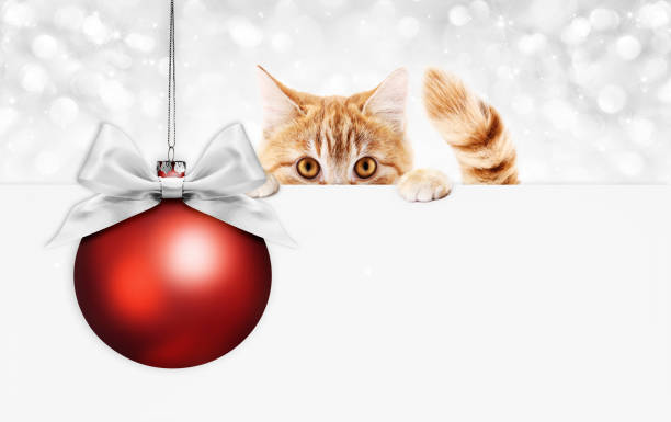 Christmas ginger cat gift card with red ball and silver ribbon bow picture id1060008632?b=1&k=6&m=1060008632&s=612x612&w=0&h=mbe7ktetzsayzkxhcwdqqpqkp5nyuzk80yncl4dajlc=