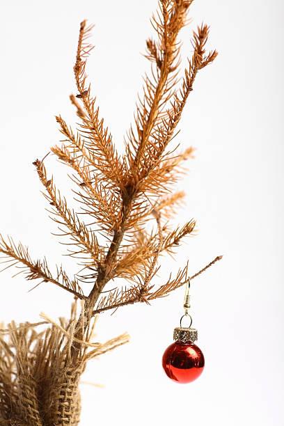 weihnachten ist abgelaufen - alte weihnachtsbäume stock-fotos und bilder