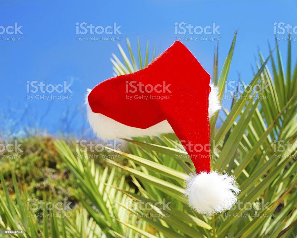크리스마스 모자 on 팜형 트리 royalty-free 스톡 사진