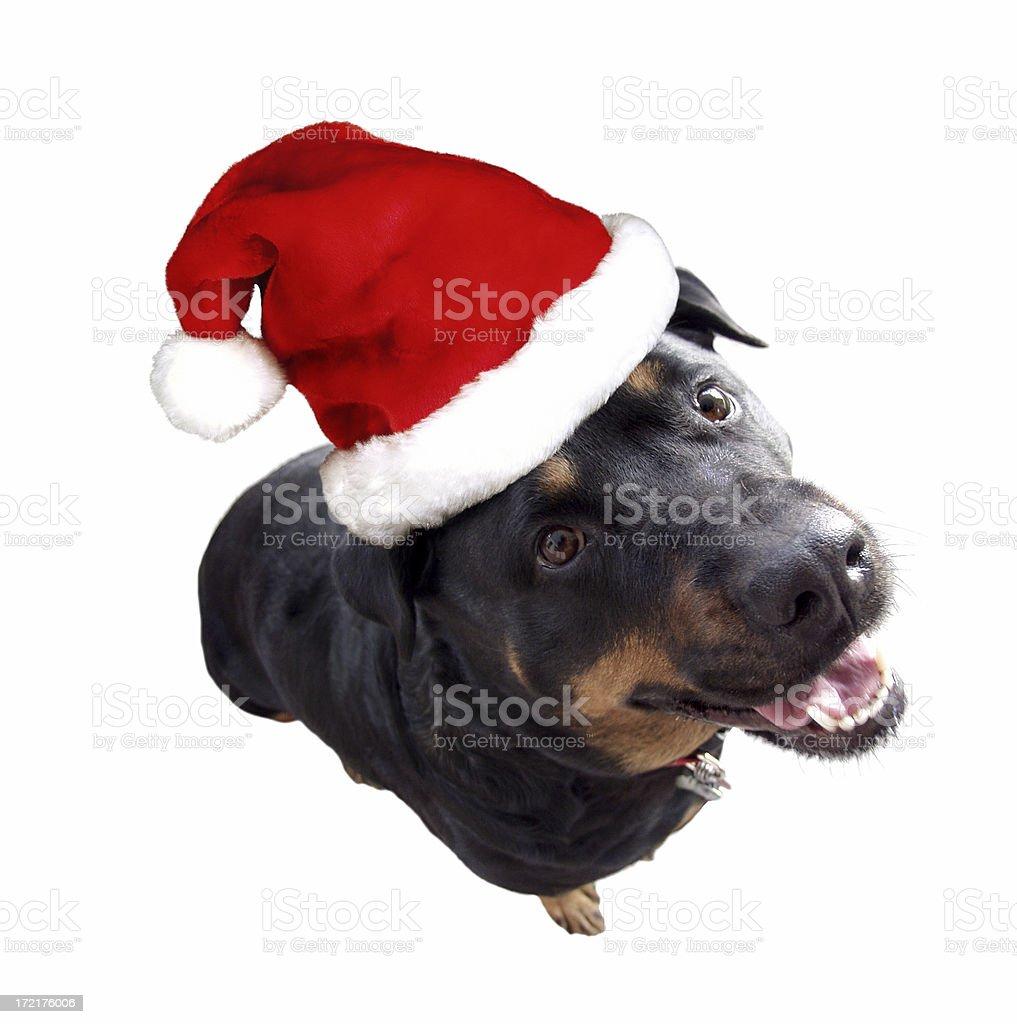 Christmas helper 2 royalty-free stock photo