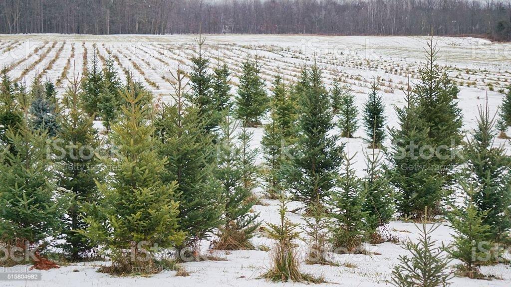 Weihnachten Urlaub Kiefer Baum Bauernhof Winter Schnee Neu