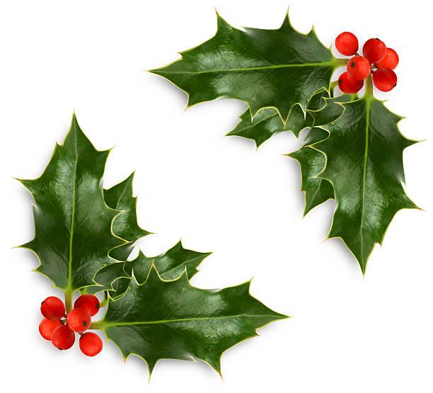 weihnachten-stechpalme-ecke - stechpalme stock-fotos und bilder