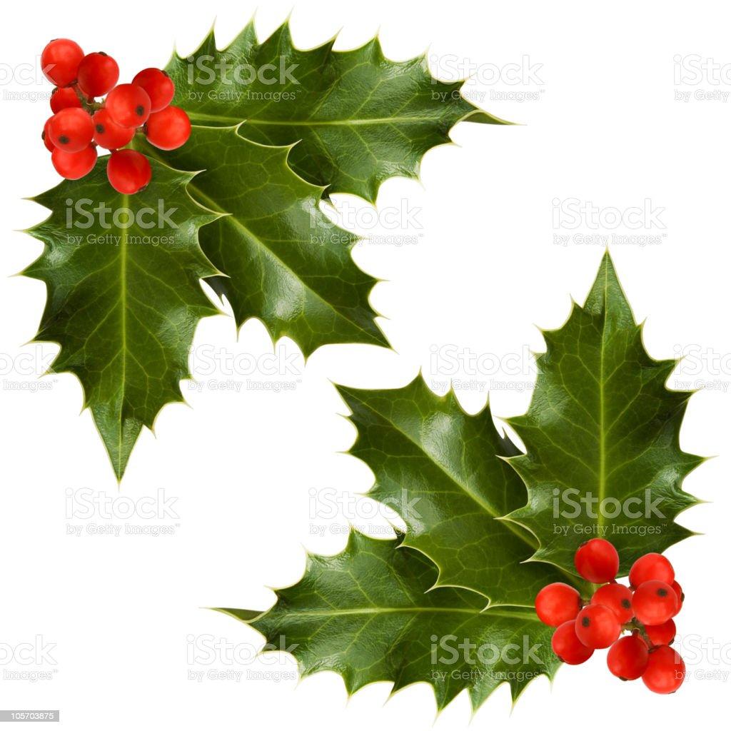 Christmas holly corner stock photo