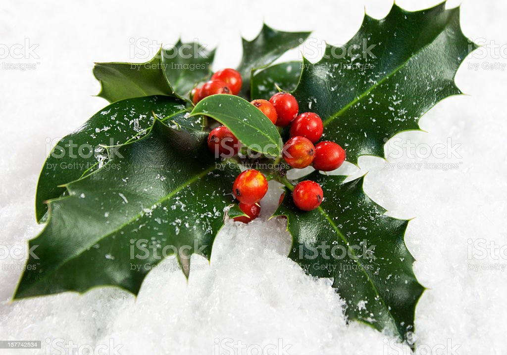 Christmas Holly stock photo