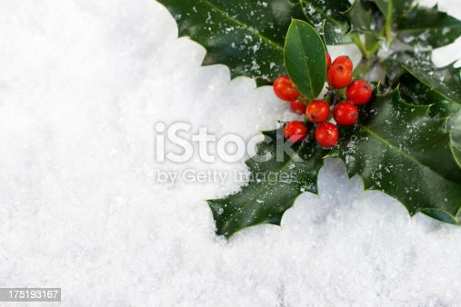 Christmas Holly on Snow