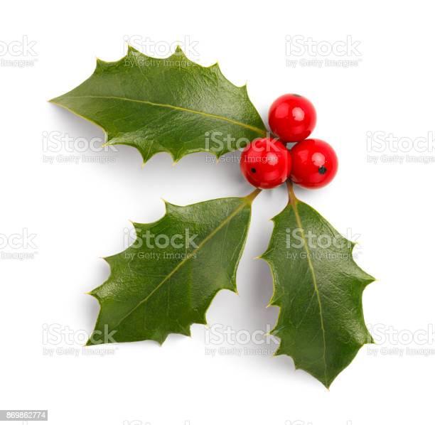 Christmas holly picture id869862774?b=1&k=6&m=869862774&s=612x612&h=ef5v5knshexz9w6p4cjtph3zyxyzv4aspguupjhkf2a=