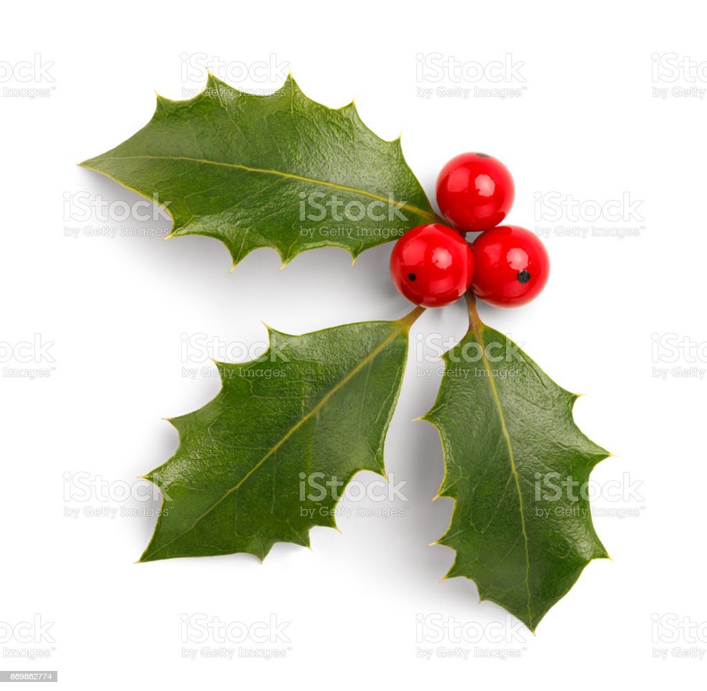 Christmas Holly – Foto