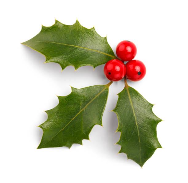 christmas holly - stechpalme stock-fotos und bilder