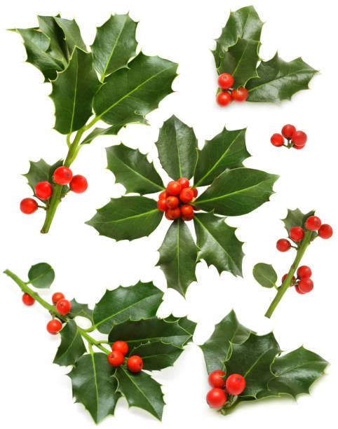 Christmas holly set - green leaf, red berry and twig stock photo