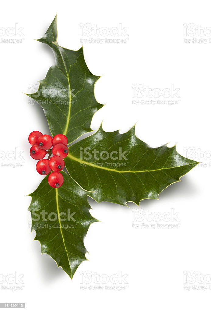 Christmas holly with clipping path in XL images stock photo