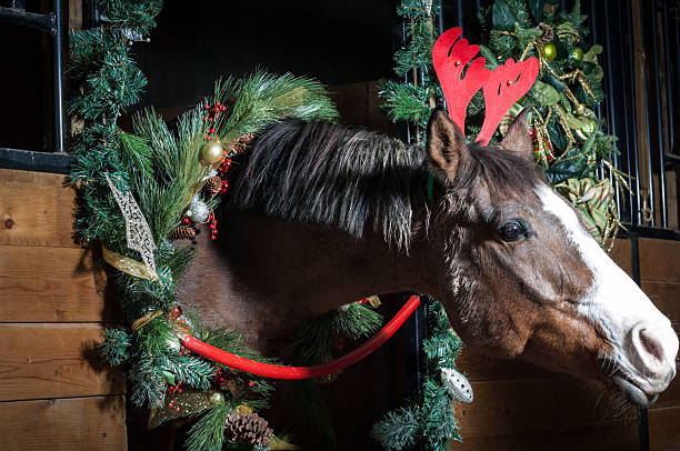 christmas horse - kellyjhall stock pictures, royalty-free photos & images