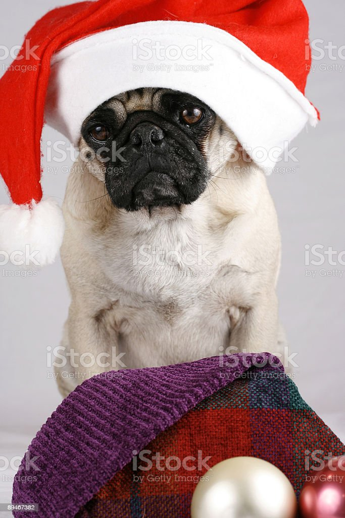 Christmas is coming 2 royalty-free stock photo
