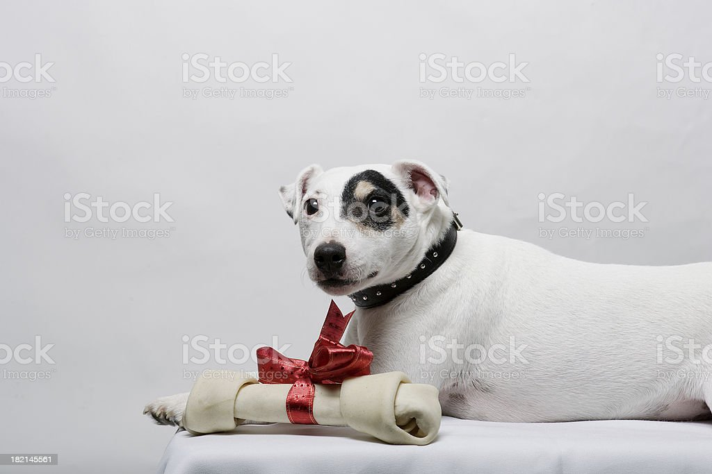 Christmas Jack 0046 royalty-free stock photo