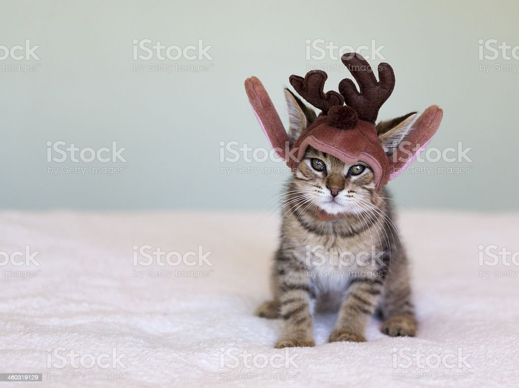 Navidad mascota foto de stock libre de derechos