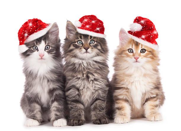 christmas kitten - katze weihnachten stock-fotos und bilder