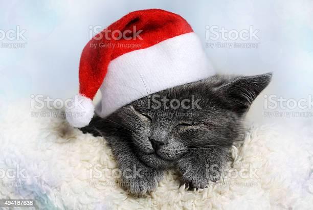Christmas kitten picture id494187638?b=1&k=6&m=494187638&s=612x612&h= 6fbwxbf 2tpoxdsqkwupni9ywt9j9syuicefd5ojn4=