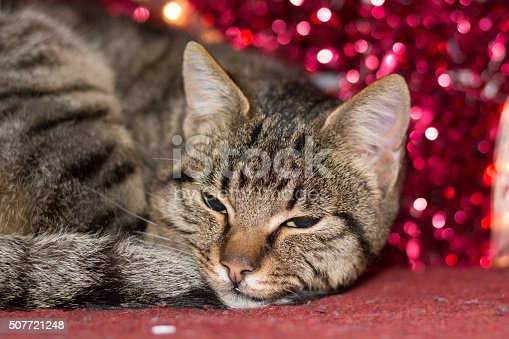 626958754 istock photo Christmas kitten with red christmas light decoration 507721248
