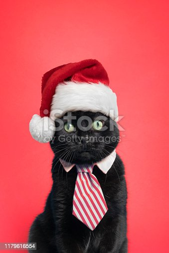 A cute cat in a red striped tie with a Santa hat on posing on a red background.