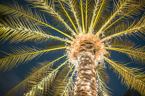 Best Palm Tree Christmas Lights Stock Photos, Pictures