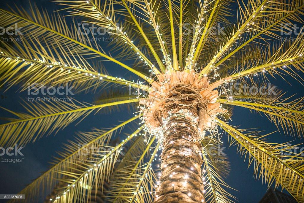 Christmas Light On A Palm Tree Stock Photo
