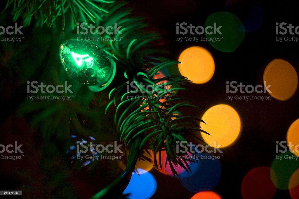 Christmas Light on live tree royalty-free stock photo