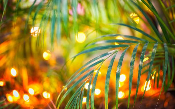 christmas lights in tropical garden - palmengarten stock-fotos und bilder