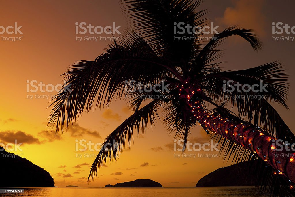Christmas lights on a palm tree at the Caribbean beach royalty-free stock photo
