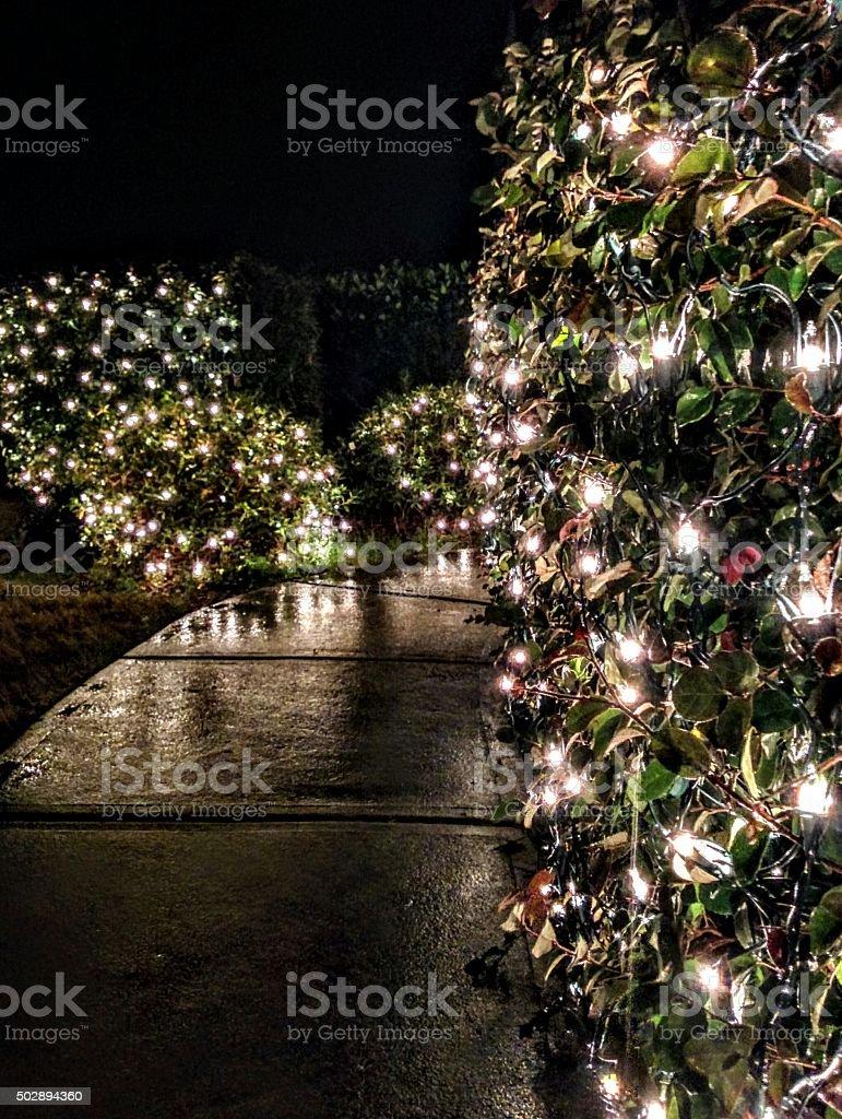 Christmas Lights on a Wet Path stock photo
