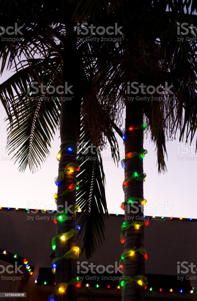 Christmas Lights In Palm Trees.Christmas Lights On Palm Trees Southern Ca Stock Photo