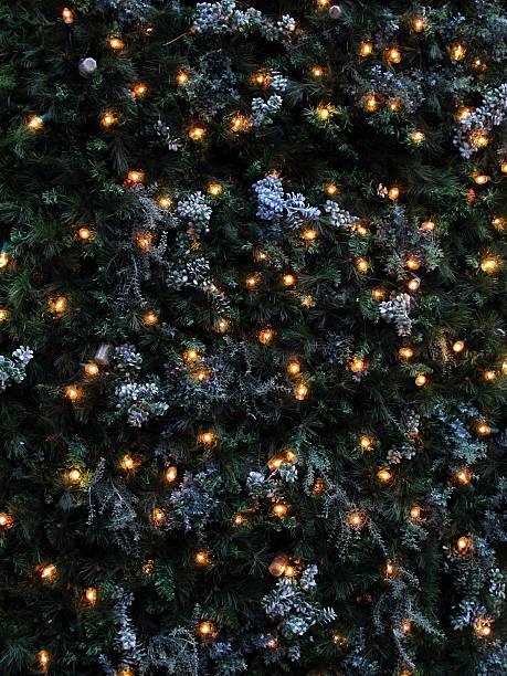 Christmas Lights on Pine stok fotoğrafı