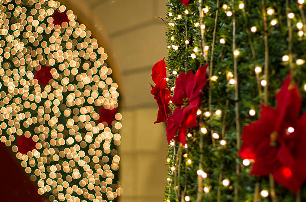 christmas lights - sternmoos stock-fotos und bilder