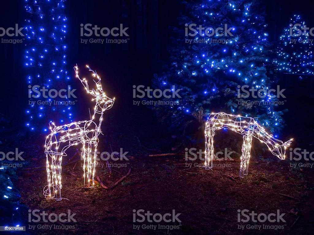 Deco De Noel Dans Le Jardin photo libre de droit de lumières de noël renne deer de