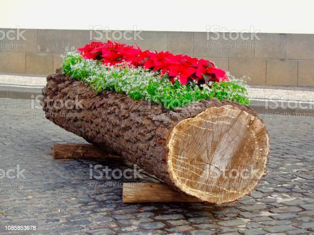 Christmas Log With Poinsettias Stock Photo - Download Image Now