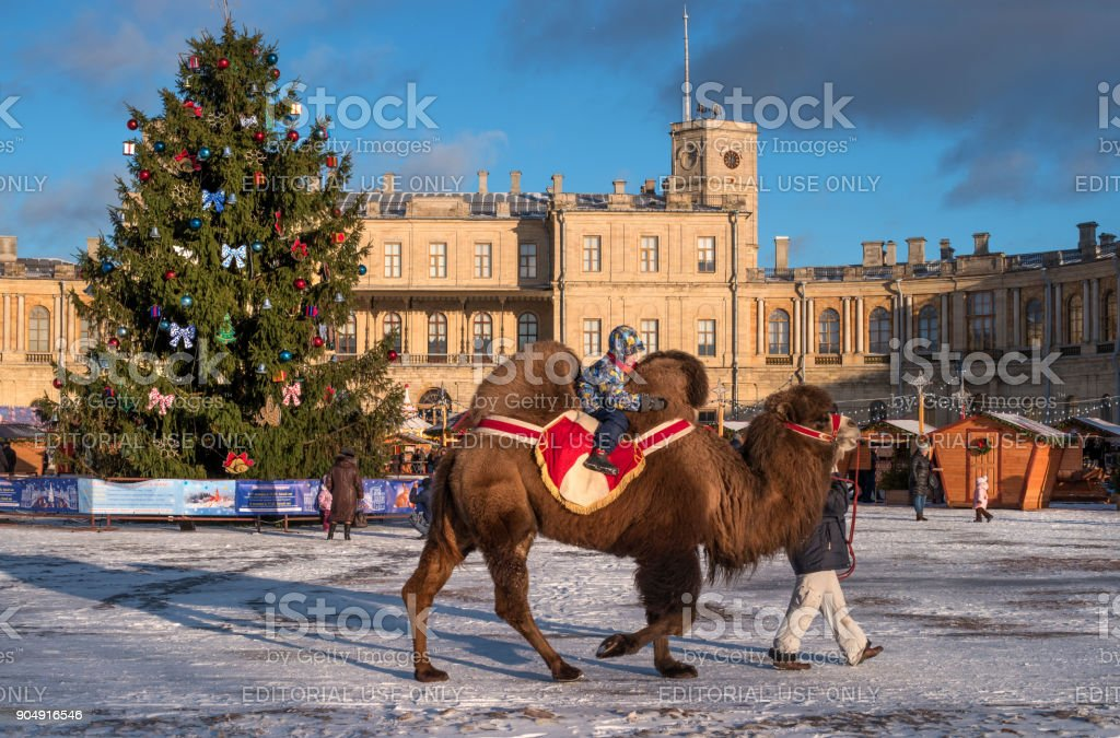Christmas market on the parade ground in front of the Gatchina Palace. Attraction - riding a camel. stock photo