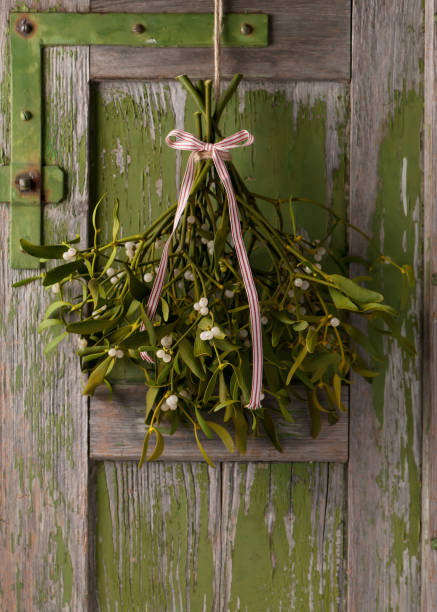 Christmas mistletoe with white and red ribbon bow. stock photo