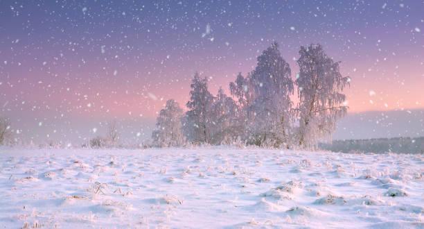 weihnachten natur. winterlandschaft bei schneefall zu beruhigen. schneeflocken fallen auf verschneiten wiese mit frostigen baum in der dämmerung. herrliche winterlandschaft. weihnachtszeit auf land. - schneeflocke sonnenaufgang stock-fotos und bilder