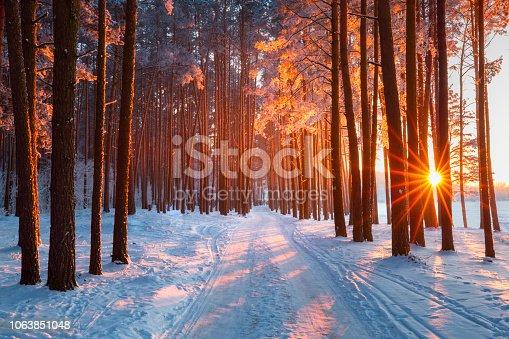 istock Christmas nature 1063851048