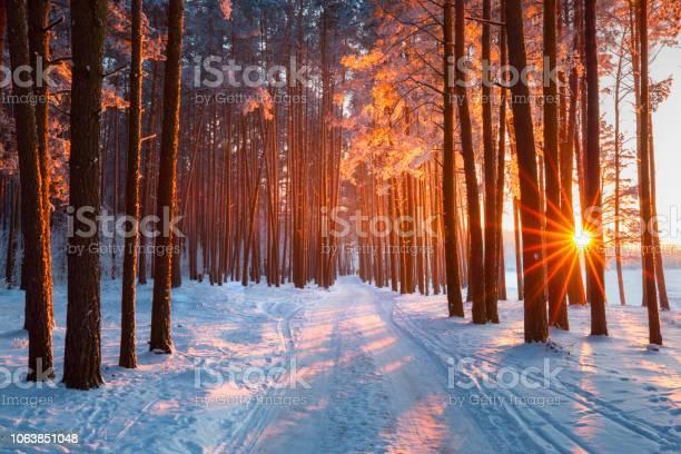Photo of Christmas nature
