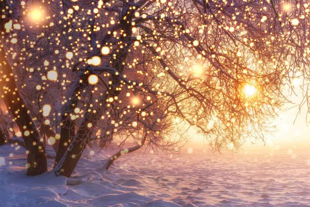 weihnachten. natur. winterlandschaft mit leuchtenden schneeflocken. leuchtende lichter auf xmas urlaub. frostigen bäume in der sonne. sonnenschein. schnee und frost. winterzauber-natur. winter-wunderland - schneeflocke sonnenaufgang stock-fotos und bilder