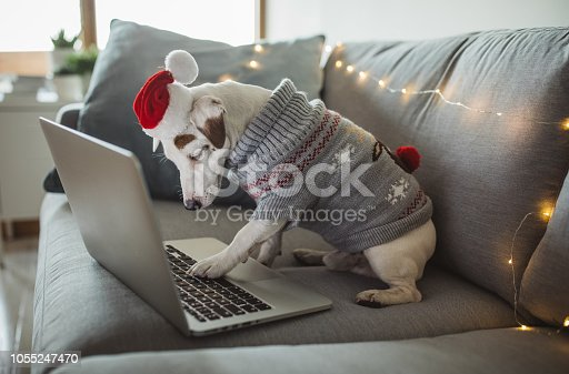 Dog celebrating Christmas at home, dog is wearing costumes and enjoy in holiday.