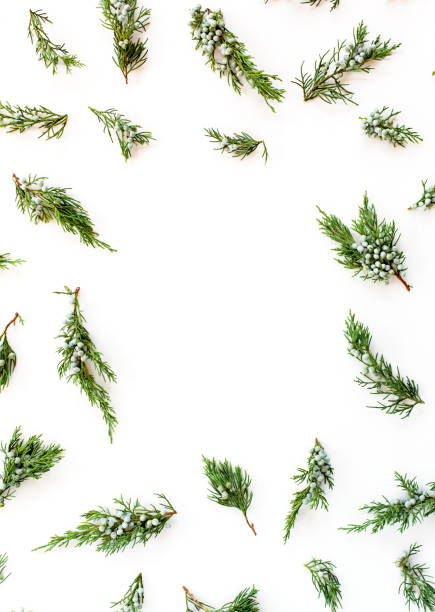 christmas or new year`s concept. frame made of fir branches isolated on white background. flat lay, top view - ramo parte della pianta foto e immagini stock