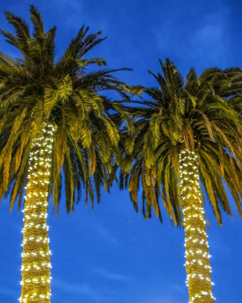 weihnachten-palmen - lichtschlauch stock-fotos und bilder