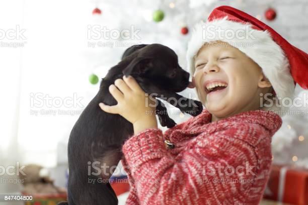 Christmas pet adoption picture id847404800?b=1&k=6&m=847404800&s=612x612&h=h1xytlkqvlga3mcouq7bmtl9w6bgkfsvdgabq8d2nfo=