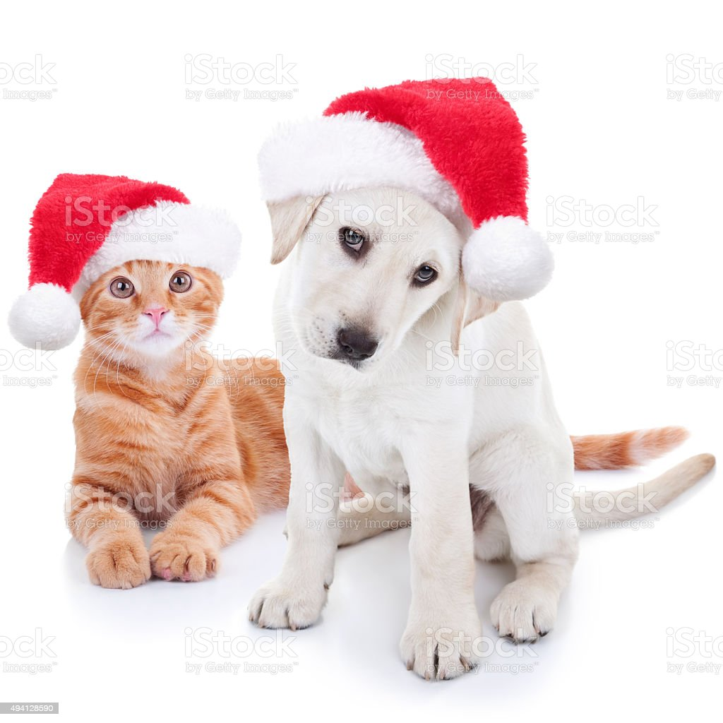Christmas Pets Dog and Cat stock photo
