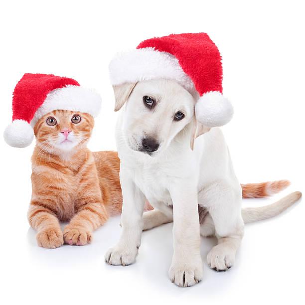 weihnachten hund und katze, haustiere - katze weihnachten stock-fotos und bilder