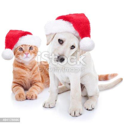 Animali domestici cane e gatto natale foto di stock istock for Rivista di programmi domestici