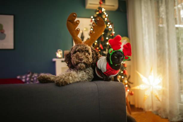 Christmas pets picture id1094535506?b=1&k=6&m=1094535506&s=612x612&w=0&h=w2fqdjkk pl63byjfrqoipmgg vwuxfzzdqkexnfkr4=
