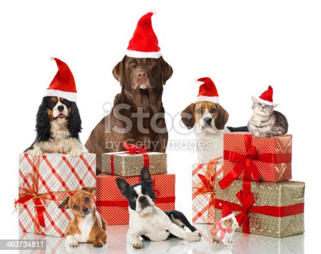 Dogs, a cat and a rabbit with christmas decoration
