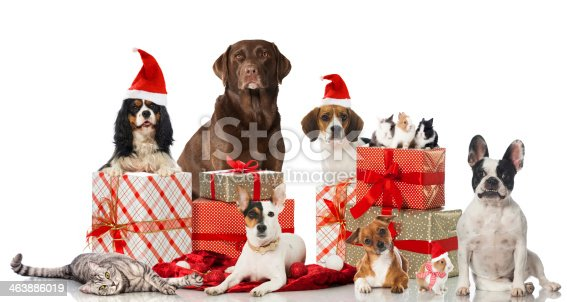 Dogs, a cat and rabbits with christmas decoration